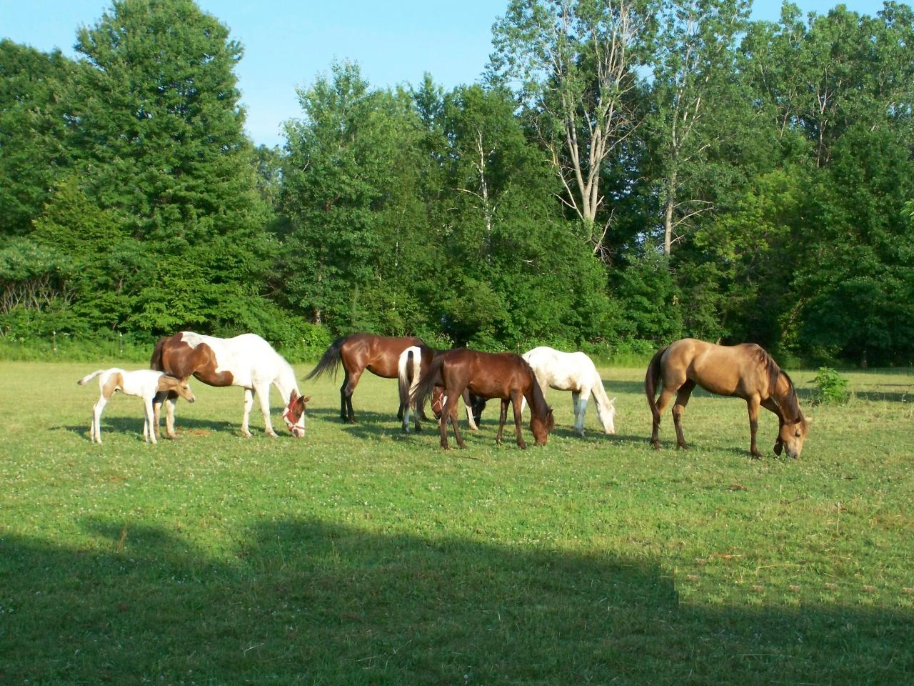 Painted Dreams Farm Horse Riding Lessons In Bucks County Pa Summer Cs Painted Dreams Horse